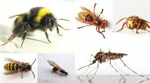 Jak radzić sobie z ugryzieniami owadów
